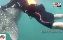 """""""แก๊งเจ็ตสกี"""" ขอโทษ เผยไม่รู้ห้ามขี่ฉลามวาฬ"""