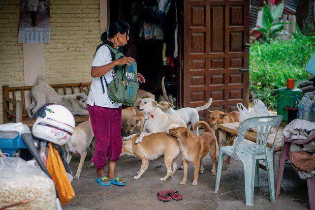 มูลนิธิเพื่อสุนัขในซอยร่วมชมรมคนรักสัตว์อุบลตามหาเจ้าของสุนัขจากเหตุอุทกภัย