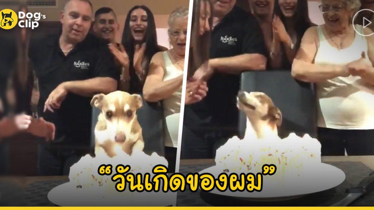ครอบครัวที่น่ารักจัดงานวันเกิดครบรอบ 13 ปีให้น้องหมาของพวกเขาอย่างอบอุ่น
