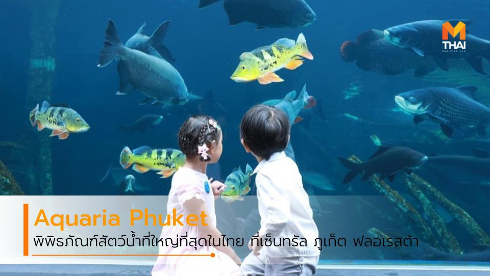 Aquaria Phuket พิพิธภัณฑ์สัตว์น้ำ ใหญ่ที่สุดในไทย ใจกลางห้าง เซ็นทรัล ภูเก็ต ฟลอเรสต้า