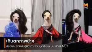 เก็บตกขำๆ น้องแค สุนัขพันธุ์ชิวาวา สวมชุดเลียนแบบ ฟ้าใส MUT