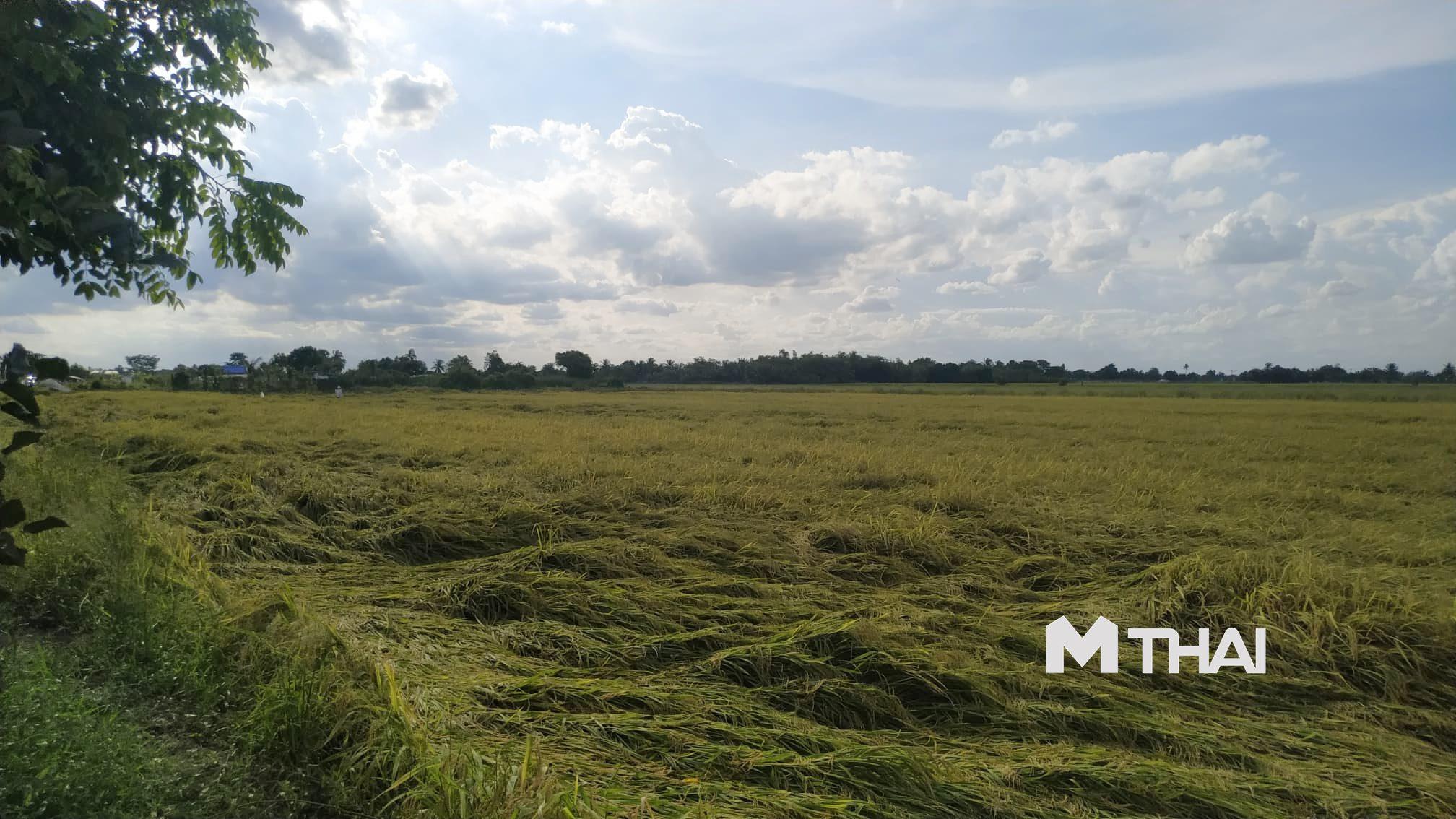 กรมชลฯ ขอเกษตรกร 'งดทำนาปี' เหตุน้ำในเขื่อนมีน้อย