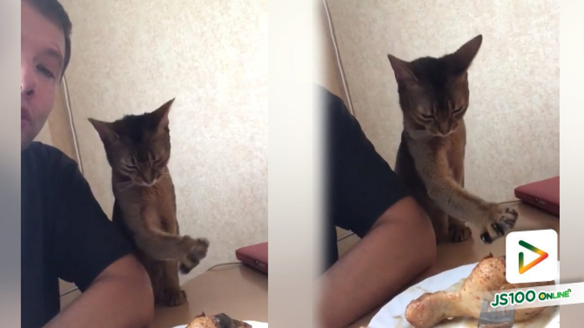 เมื่อแมวอยากกินไก่ ก็ต้องอ้อนป๊ะป๊าแบบนี้แหละ (12-06-61)