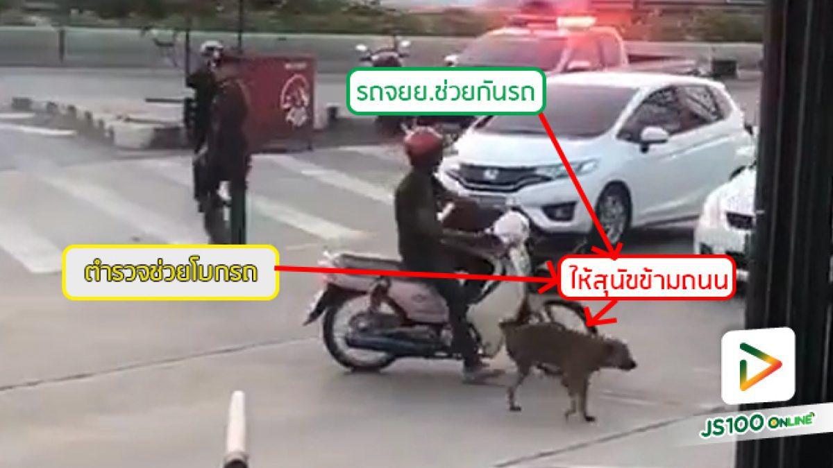 พลังแห่งน้ำใจ!! เจ้าหน้าที่ตำรวจ และพลเมืองดี ช่วยเหลือสุนัขข้ามถนนจนปลอดภัย (21-04-2561)