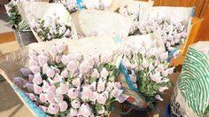 สคบ.ตรวจแหล่งปลูกดอกไม้เชียงใหม่ช่วงวาเลนไทน์