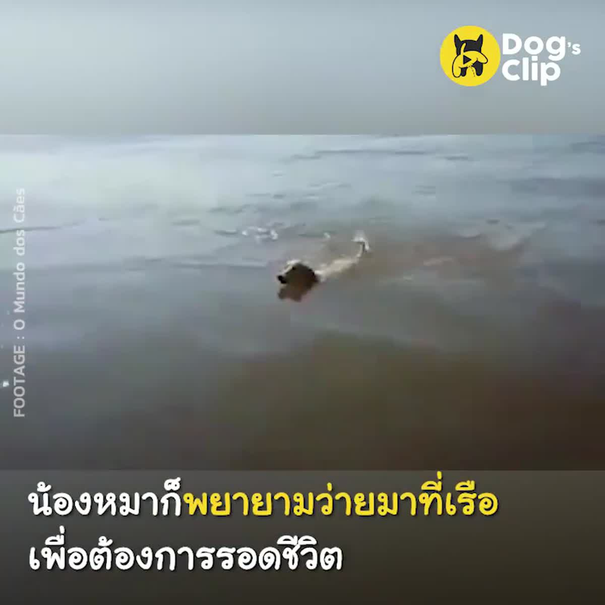 ไม่มีใครรู้ว่าน้องหมาไปลอยอยู่กลางแม่น้ำได้ยังไง