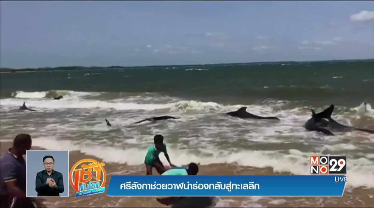 ศรีลังกาช่วยวาฬนำร่องกลับสู่ทะเลลึก
