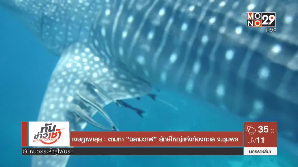 """เจษฎาพาลุย : ตามหา """"ฉลามวาฬ"""" ยักษ์ใหญ่แห่งท้องทะเล จ.ชุมพร"""
