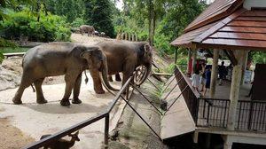 'สวนสัตว์เปิดเขาเขียว' คึกคัก วันเด็กแห่งชาติ เด็ก ๆ เที่ยวชมสัตว์