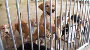 กรมปศุสัตว์ ชี้แค่ร่าง พ.ร.บ. ยังไม่ได้ประกาศใช้กฎหมายขึ้นทะเบียนหมา-แมว