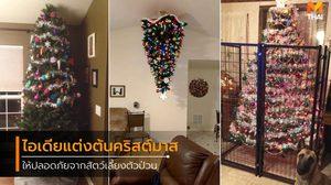 ไอเดียปกป้องต้นคริสต์มาส ให้ปลอดภัยจากสัตว์เลี้ยงแสนรัก