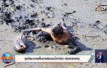 ลูกโลมาเกยตื้นตายริมแม่น้ำท่าจีน เร่งหาสาเหตุ