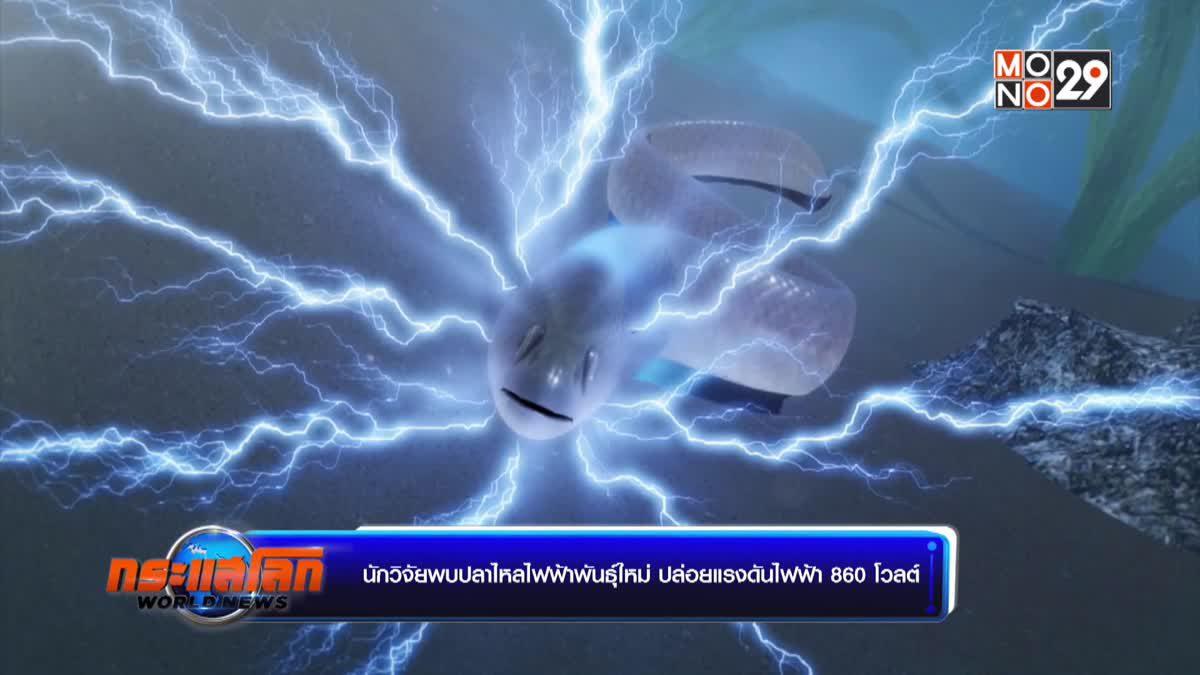 นักวิจัยพบปลาไหลไฟฟ้าพันธุ์ใหม่ ปล่อยแรงดันไฟฟ้า 860 โวลต์