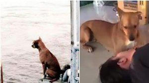 ชีวิตใหม่ดีเว่อร์!  'เจ้าท่าเรือ' หมานั่งรอเจ้าของที่ท่าน้ำ (คลิป)