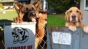ป้ายเตือนระวังสุนัขดุ! แต่เจอจะๆ แบบนี้ จะกลัวดีไหมเนี่ย