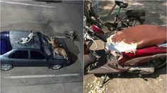หนุ่มร้องทุกข์! ชาวบ้านเดือดร้อนหนัก หลังฝูงหมานอนบนรถ-กัดทำลายเสียหาย