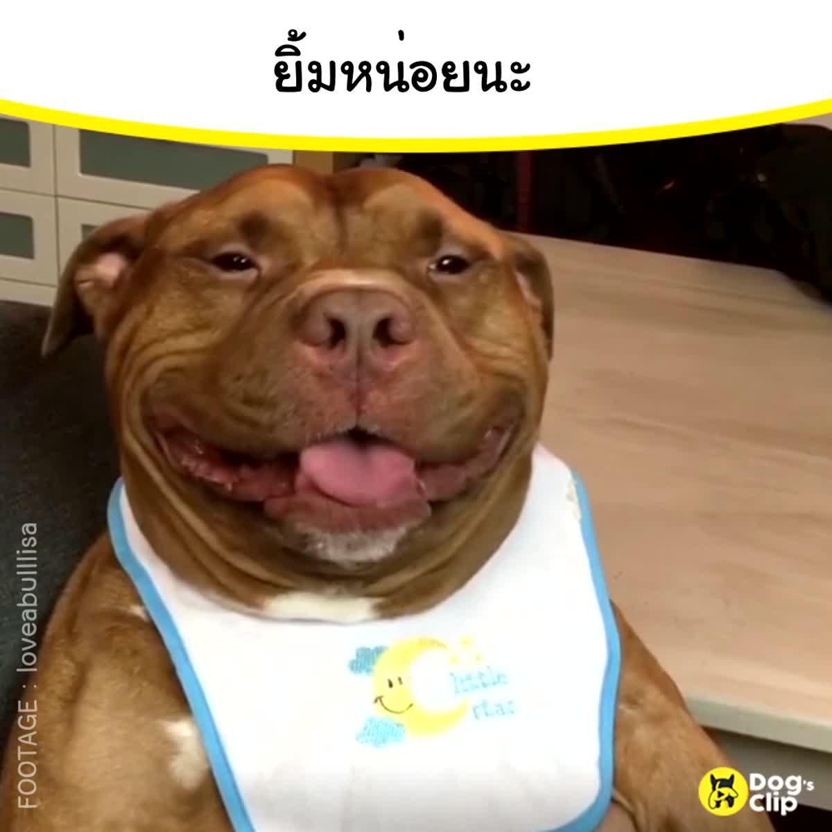 เหล่าบรรดาน้องหมาจะมาทำให้คุณยิ้ม
