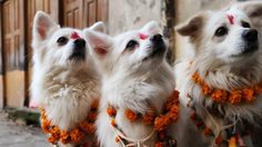 Canine Officers honored and decorated in a Nepal's festival