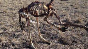 ภาพสยอง!  จิงโจ้ยืนแห้งตาย หลังออสเตรเลียเผชิญภัยแล้งหนักสุดในรอบ 100 ปี