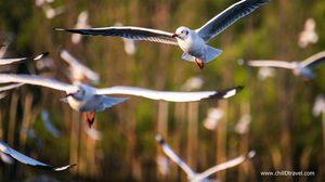 เที่ยวบางปู เดินกินลม ชมฝูงนก ฟินง่าย ๆ ใกล้กรุง
