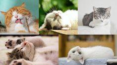 """8 สิงหาคม ของทุกปี """"วันแมวโลก"""" (World Cat Day)"""