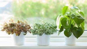 4 วิธี ดูแลไม้ประดับในร่ม ให้สามารถเจริญเติบโตได้อย่างสวยงาม
