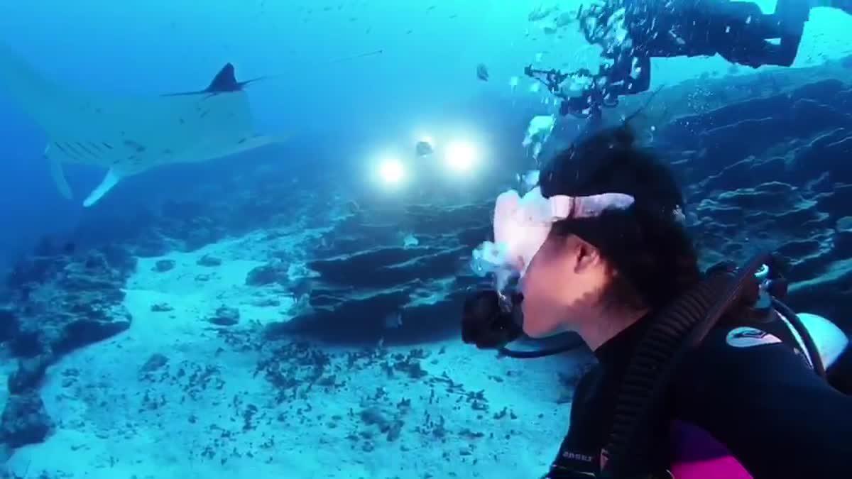 ครั้งนึงในชีวิต! ไปดำน้ำกับฉลามและฝูงปลาอีกมากมายที่ South Maldives