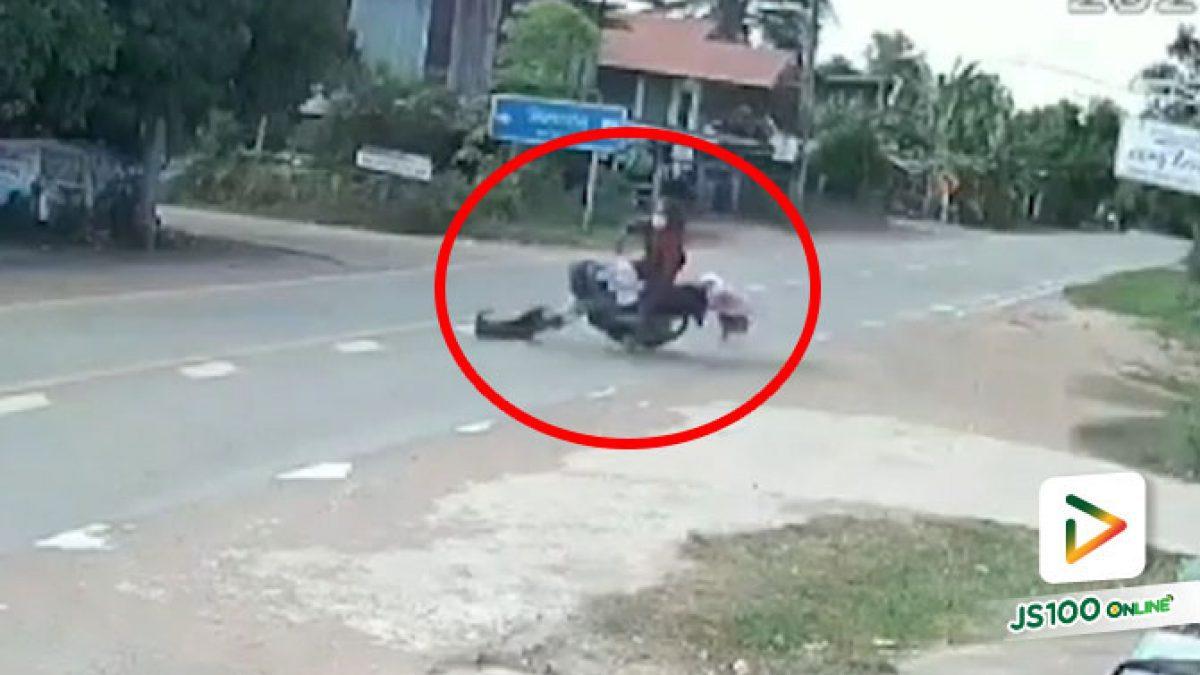 ขี่มาดีๆ เจอสุนัขวิ่งตัดหน้า ก่อนชนล้มร่างกระแทกพื้น บาดเจ็บสาหัส (03/08/2021)
