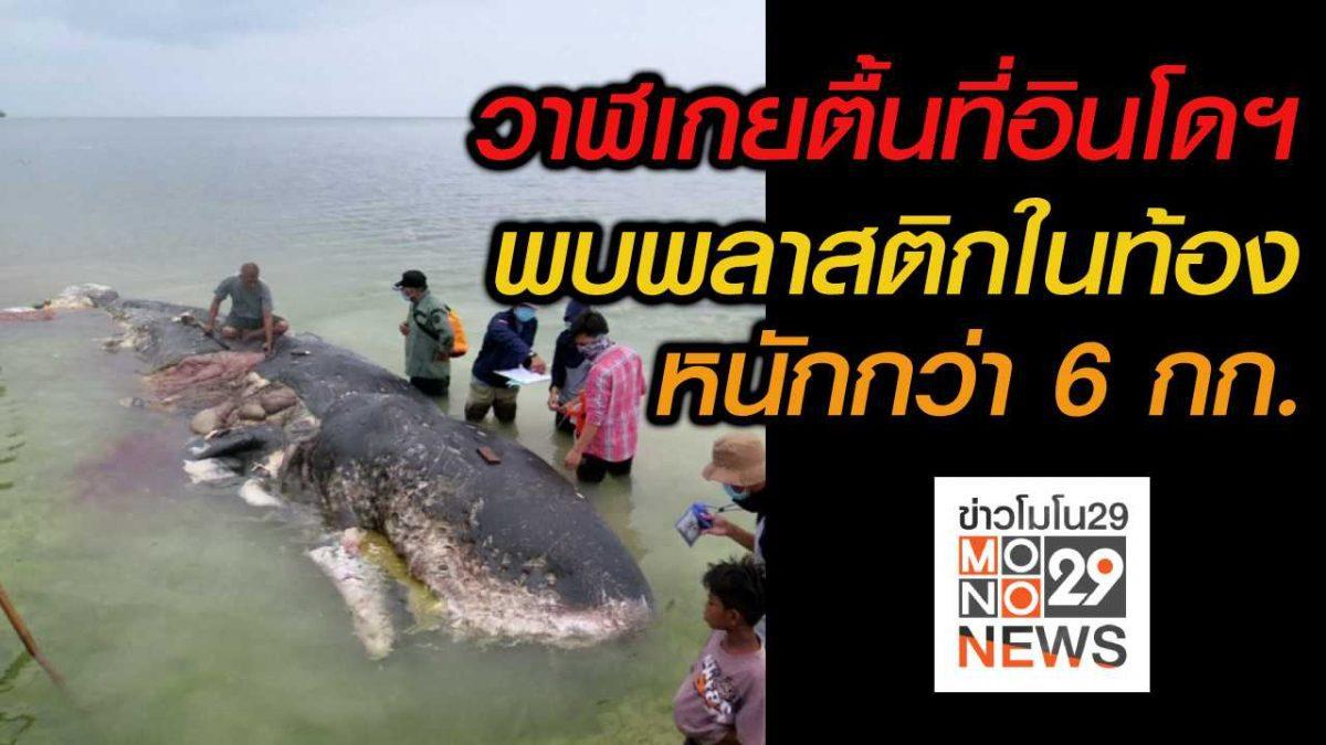#เรื่องเล่ารอบโลก วาฬเกยตื้นที่อินโดฯ พบพลาสติกกว่า 6 กก.ในท้อง