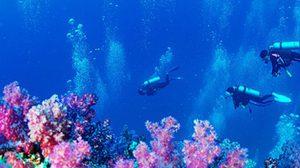 กองหินริเชลิว จุดดำน้ำลึกที่สวยงามแห่ง หมู่เกาะสุรินทร์