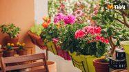 แจกเคล็ดไม่ลับ วิธีปลูกดอกไม้ ให้ออกดอกไปตลอด