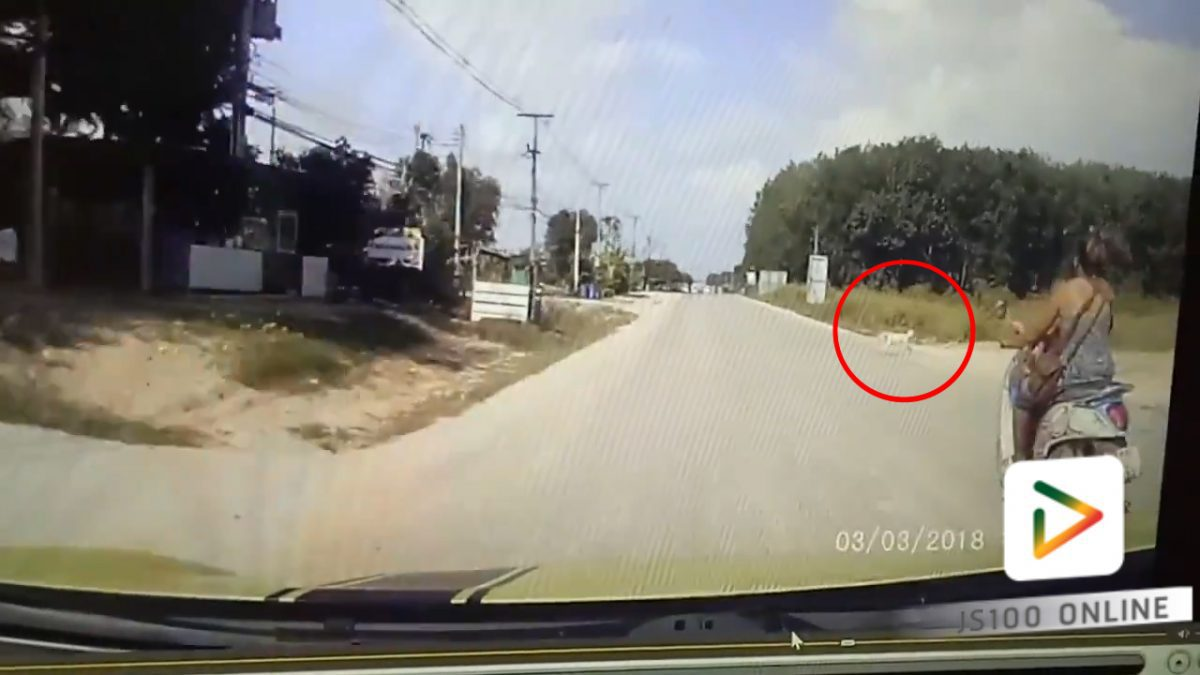 รถจยย. ชนกับสุนัข ที่ข้ามถนน!! (03-03-61)