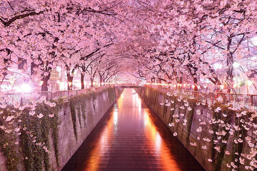 อุโมงค์ต้นไม้สุด Unseen ทั่วโลก