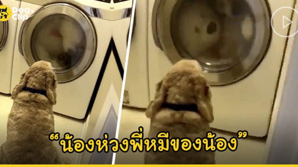 น้องหมาติดตุ๊กตาหมีแบบสุดๆ แม้เจ้านายแอบเอาไปซักยังตามไปเฝ้าถึงหน้าเครื่องซักผ้า