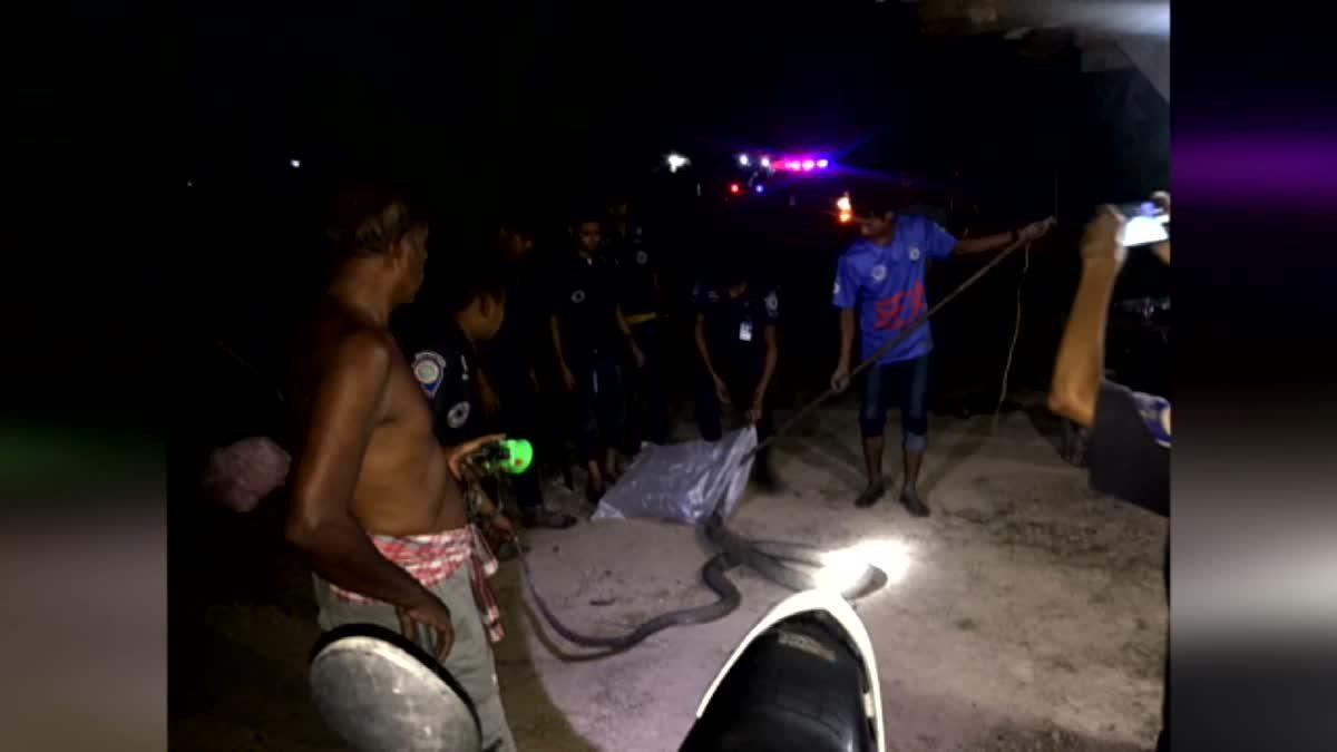 เจ้าของอู่ซ่อมรถ วิ่งป่าราบหลังไปวางอวนหาปลา แต่ติดจงอางยักษ์