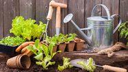 4 เทคนิคง่ายๆรู้ไว้ก่อนทำ สวนผักขนาดเล็ก ที่บ้าน