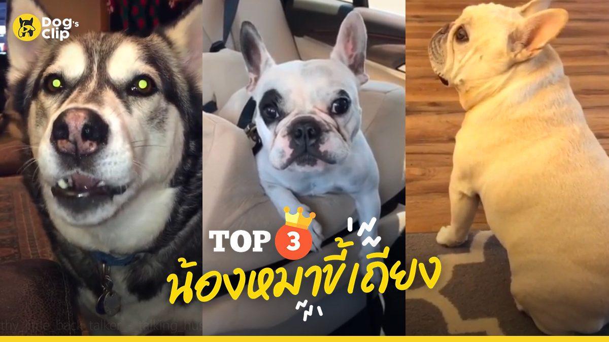 Top3 น้องหมาเถียงเก่ง | Dog's Clip