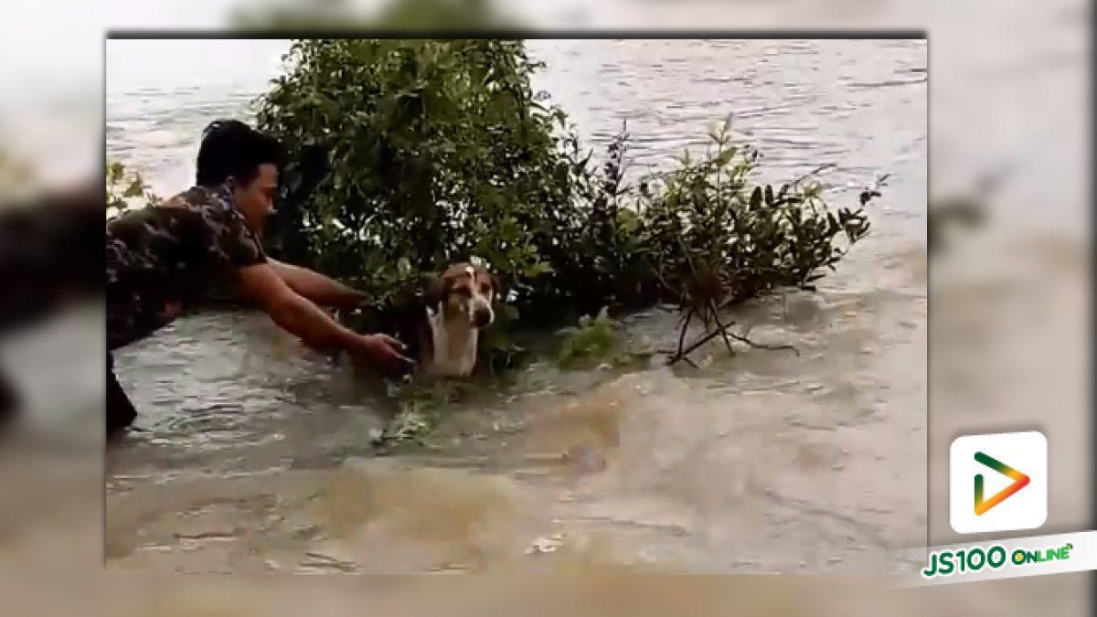 คลิปสองหนุ่มช่วยเจ้าตูบที่ติดพงหญ้าในน้ำหลาก จ.นครพนม (17-07-61)