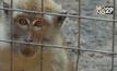 ชีวิตใหม่ของลิงในจาการ์ต้า