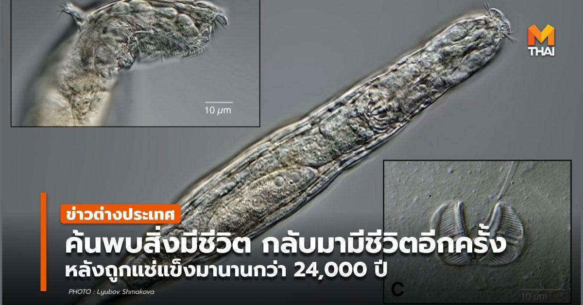 พบแพลงก์ตอนสัตว์ มีชีวิตอีกครั้ง หลังถูกแช่แข็งกว่า 2.4 หมื่นปี