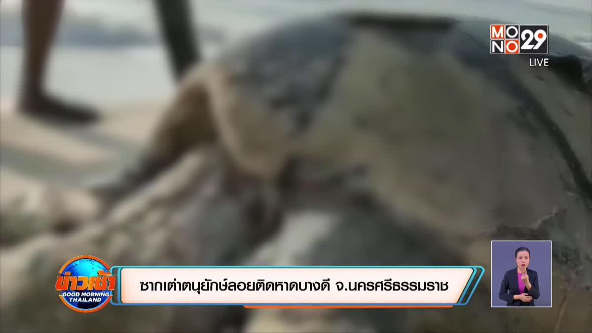 ซากเต่าตนุยักษ์ลอยติดหาดบางดี จ.นครศรีธรรมราช