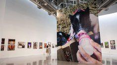 ชวนชมภาพถ่ายฝีพระหัตถ์ ของสมเด็จพระเทพฯ