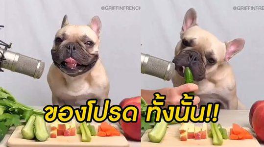 เสียงที่ได้จะขนาดไหน! เมื่อ ใช้ไมค์จับเสียงเฟรนบลูด็อก ขณะกินผัก+ผลไม้