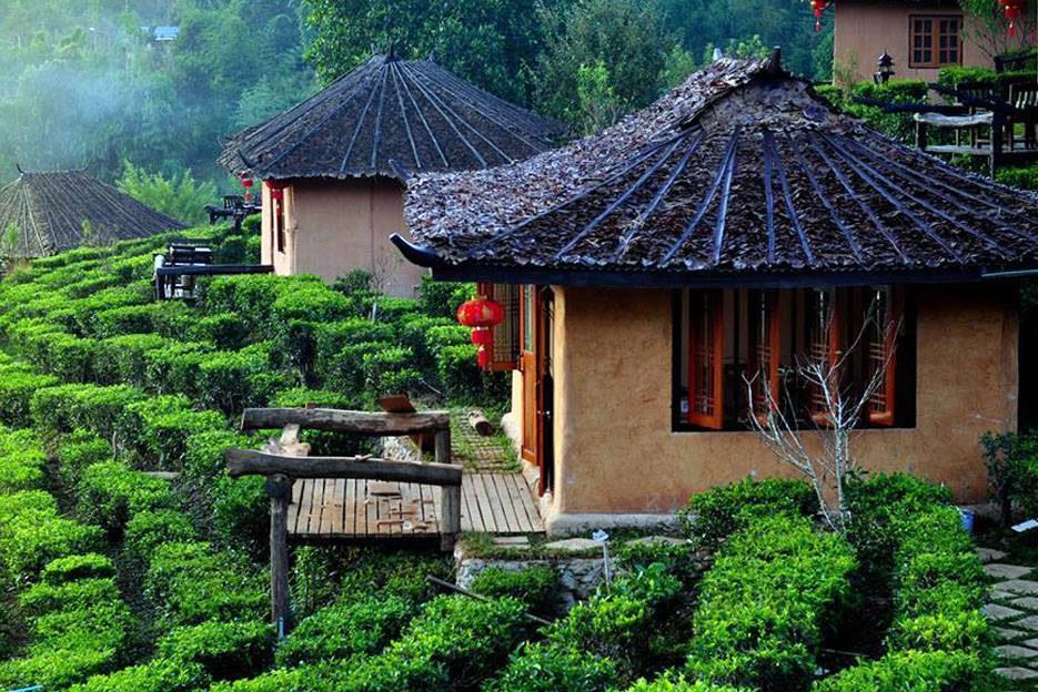 ไร่ชา บ้านรักไทย จังหวัดแม่ฮ่องสอน