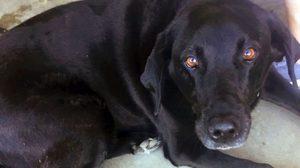 ฮือฮา ! สุนัขช่วยหนุ่มใหญ่รอดคดีล่วงละเมิดทางเพศ