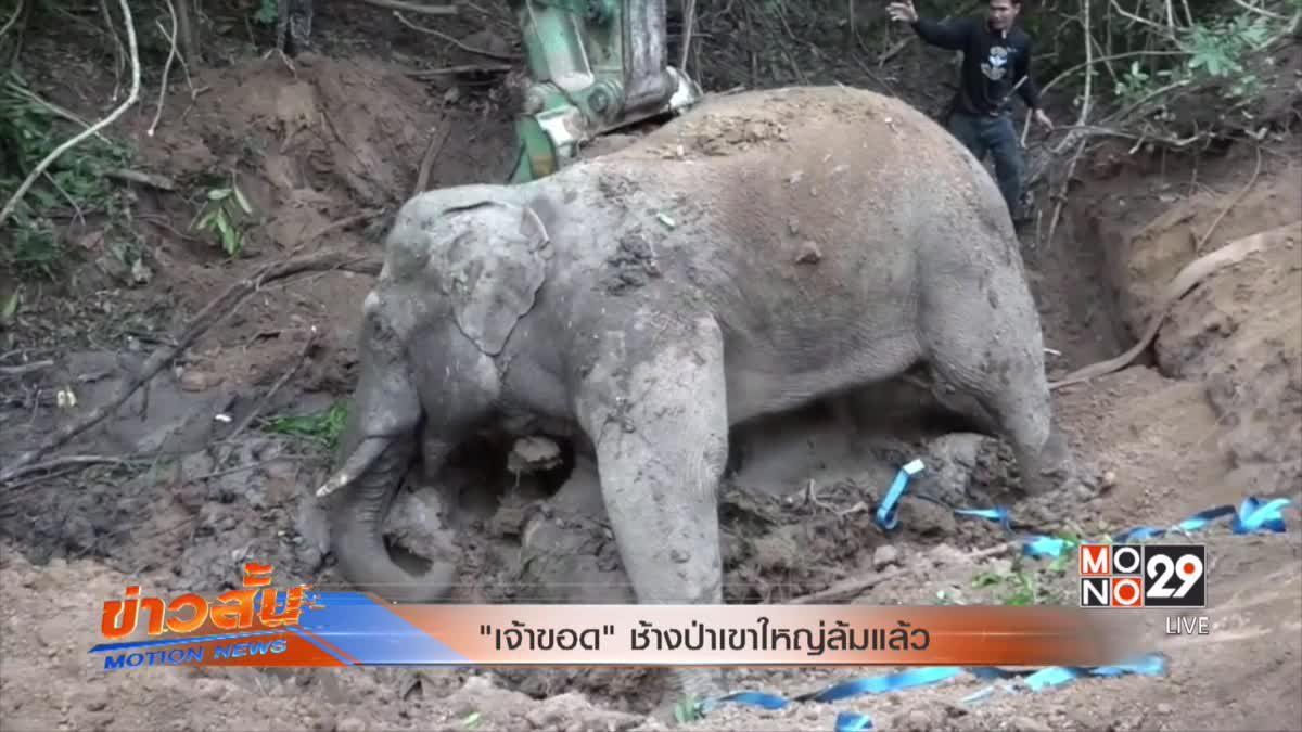 """""""เจ้าขอด""""ช้างป่าเขาใหญ่ล้มแล้ว"""
