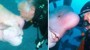 คุณตาวัย 79ปีมีเพื่อนซี้เป็นปลาทะเล คบหากันมากว่า 30ปี