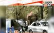 ช้างป่าหลุดเข้ามาในเมืองทางตอนใต้ของจีน