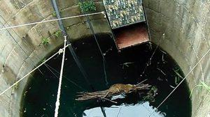 นาทีระทึก กู้ภัยช่วยชีวิต เสือดาวตกบ่อน้ำที่อินเดีย