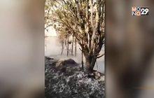 ไฟป่าภูกระดึง ทำเสียหายกว่า 3,400 ไร่